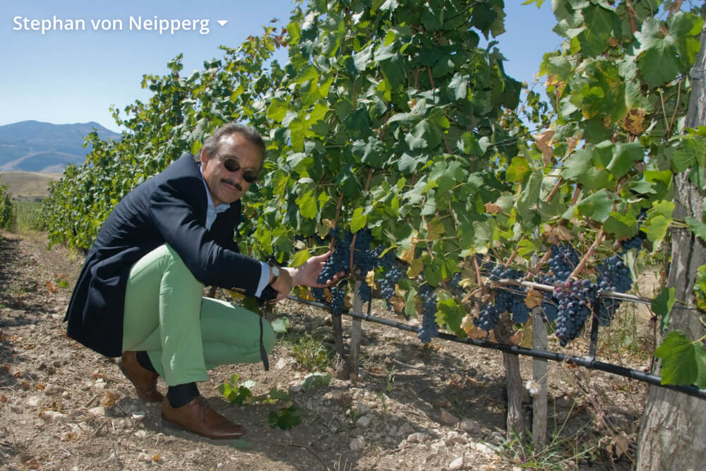 Koop de lekkerste wijnen in onze webshop!